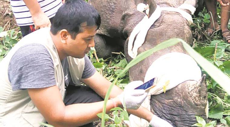bihar rhino reserve, bihar floods, animals dead bihar floods, nepal rhinos, forest dept bihar, valmiki tiger reserve, indian rhinos, nepal rhino, Chitwan national park, rhino rescue, indian express, india news