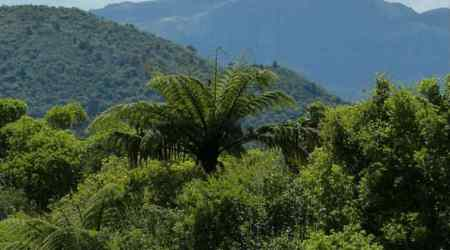 Tropical forests now emit more carbon than they soakup