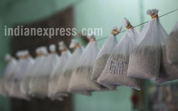 tussar silk, tussar silkworm, taser silk photos, tussaer silkworm photos, sericulture photos, silk photos, sericulture pictures, taser silk pictures, tusser silkworm pictures, indian express