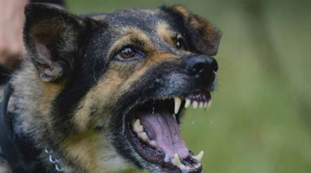 Kerala to become first Indian state to come out with own anti-rabies vaccine