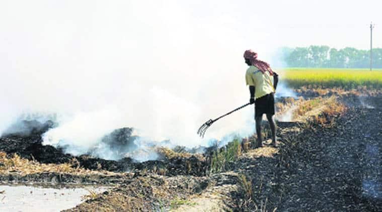 stubbble burning, paddy burning, punjab farmers
