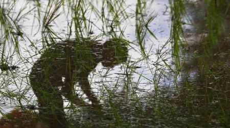 3,515 farmers committed suicide in five years inKarnataka