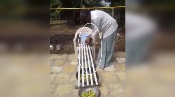 innovative tricks, funny innovation video, man uses bamboo sticks to to know lemon size, indian farmer uses bamboo sticks to know lemon size, indian express, indian express news
