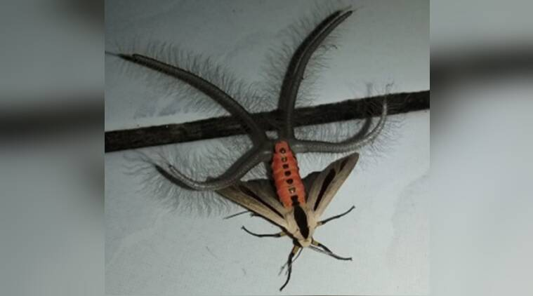 Video Yikes Mysterious Creepy-Crawly Spotted In The House Leaves Netizens Terrified -3272