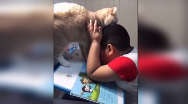 funny cat video, funny animal video, cat not letting boy study video, cat videos, indian express, indian express news