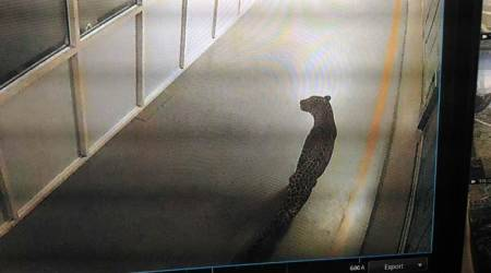 Leopard enters Maruti Suzuki plant in Manesar, halts work; forest officials conduct search