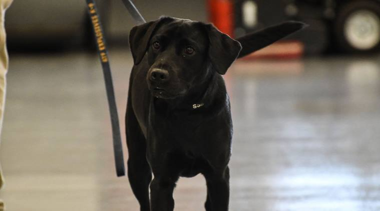 cia, cia fires dog from work, siniffing dog fired from work, CIA K9 dog not fit for work, wrld news, odd news, bizarre news, indian express