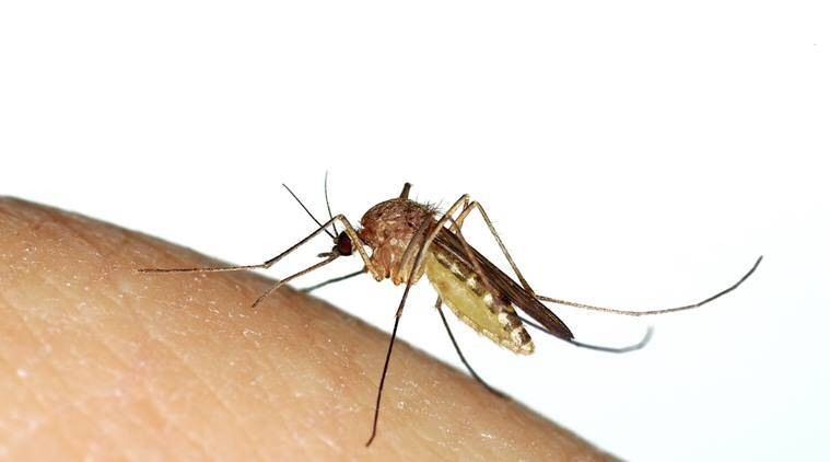 malaria, malaria cases across Mumbai, malaria cases in government hospitals, dengue cases in government hospitals, dengue, dengue cases across Mumbai, mosquito-borne infections, monsoon infections, water born infections, Indian Express news