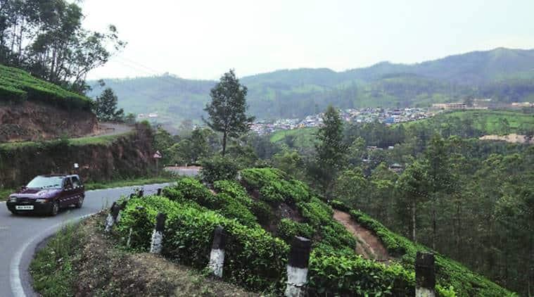 munnar, munnar kerala, neelakurinji, kerala tourism, india tourism, places to visit in kerala, places to visit in south india, indian express, inidan express news