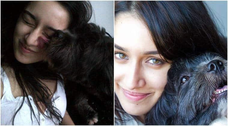 Shraddha Kapoor, Shraddha Kapoor Twitter, Shraddha, Shraddha Kapoor diwali video