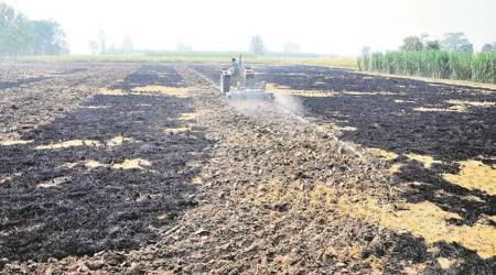 Paddy Straw Management Challenge Fund, global cash award, pollution-free management, smog, air pollution, punjab government, punjab government challenge, india news, indian express news