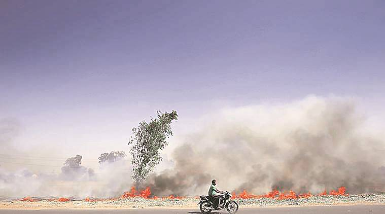 'Give incentives to farmers to stop stubble burning'