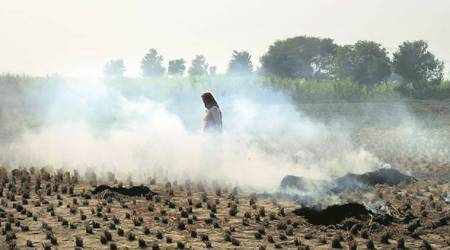 stubble burning, crop burning, teachers control stubble burning, sirsa, sirsa teaches, sirsa lecturers, haryana farmers, haryana, latest news, indian express