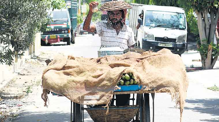 Protecting his fruits during a hot April in Lucknow