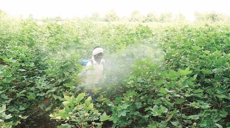 Pesticide deaths stalk Yavatmal fields; 18 farmers dead, over 800 hospitalised