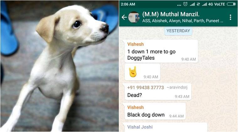 puppy cruelty, animal cruelty, puppy thrown off a terrace, animal violence, puppies getting abused, youtube puppy abuse, animal cruelty report, indian express, indian express news