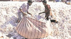 Protest after govt demands GST: Ginners' strike leaves cotton farmers in lurch