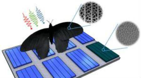 Solar cells, butterfly wing nanostructures, improved solar radiation absorption, Karlsruhe Institute of Technology, photovoltaic systems, scanning electron microscopy, PV absorber