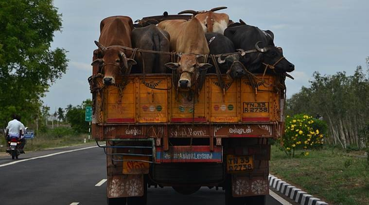 bihar, vaishali, cattle dies, truck accident, india news, express news, express online
