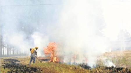 Delhi air pollution, Crop burning, Stubble burning, Punjab crop burning, Haryana crop burning,