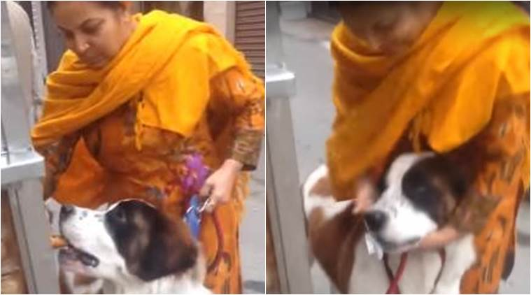 Image of: Rabbit Dog Video Dog Eating Panipuri Dog Eating Gol Gappe Woman Feeding Pet Dog The Indian Express Video Woman Feeds Dog Gol Gappas And He Loves It Trending News