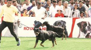 Pune residents to witness sports week for pets soon
