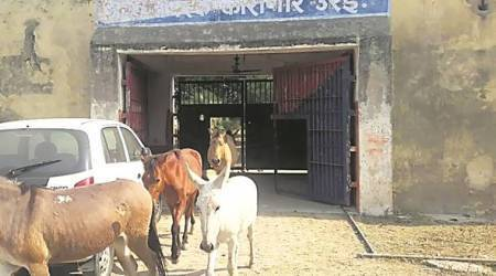 8 donkeys spent three days in UP's Orai jail for eating plants, destroying flower pots