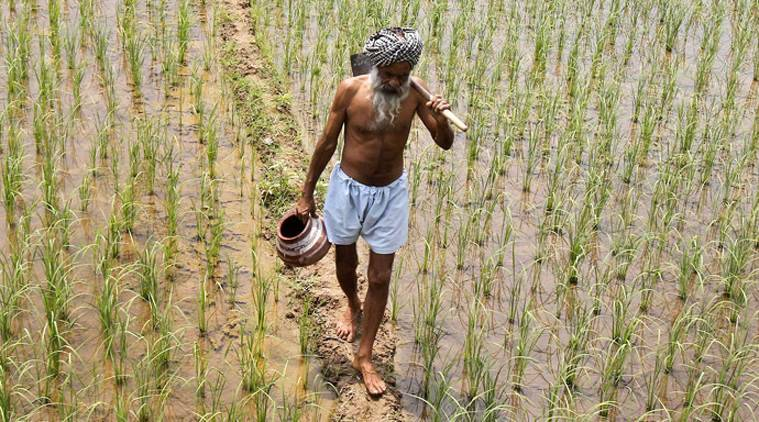 farmers, agriculture, doubling farmers income, agricultural policy for farmers, Pradhan Mantri Fasal Bima Yojna, PM Narendra Modi, agriculture sector, indian express columns