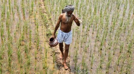 farmers, agriculture, doubling farmers income, dfi, agricultural policy for farmers, Pradhan Mantri Fasal Bima Yojna, PM Narendra Modi, agriculture sector, indian express columns