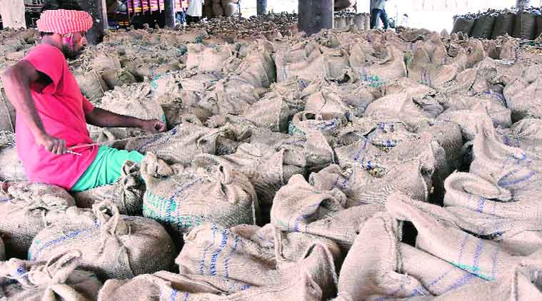 gujarat assembly elections, gujarat assembly elections 2017, Gujarat farmers, Gujarat groundnut farmers, Gujarat Bharatiya Kisan Sangh, Narendra Modi, rahul gandhi, congress, vijay rupani, BJP