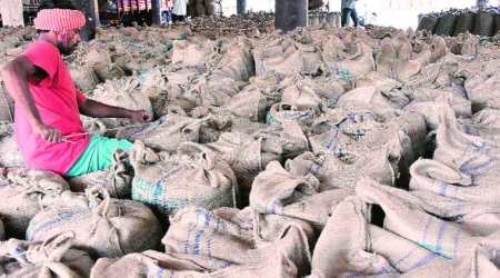 Gujarat: As traders reject 'adulterated' stock of groundnut, state government, NAFED pass the buck