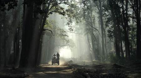 Caught on wrong foot, Wildlife Institute of India says drop Corbett clause