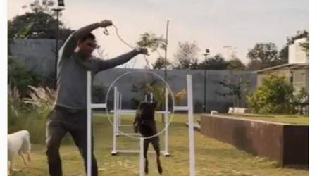 MS Dhoni trains dogs at his Ranchi farmhouse, watch viral video