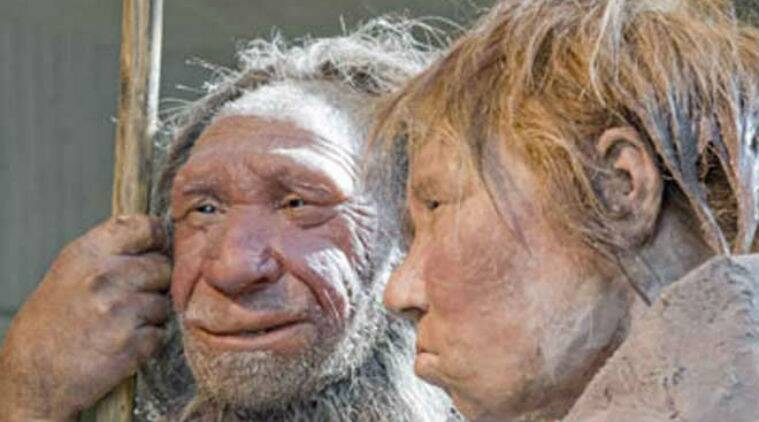 Human evolution from Neanderthals seen as uneven, punctuated: Study