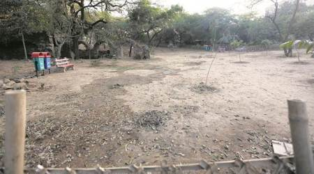 'Swachh Mehrauli' Drive: 45-year-old leads charge to fix park that turned into dumpingground