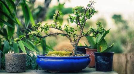 Invest in miniature plants, use teacups for indoorgardens