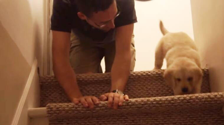 man and puppy, puppy videos, man teaching puppy, puppy climbing down stairs