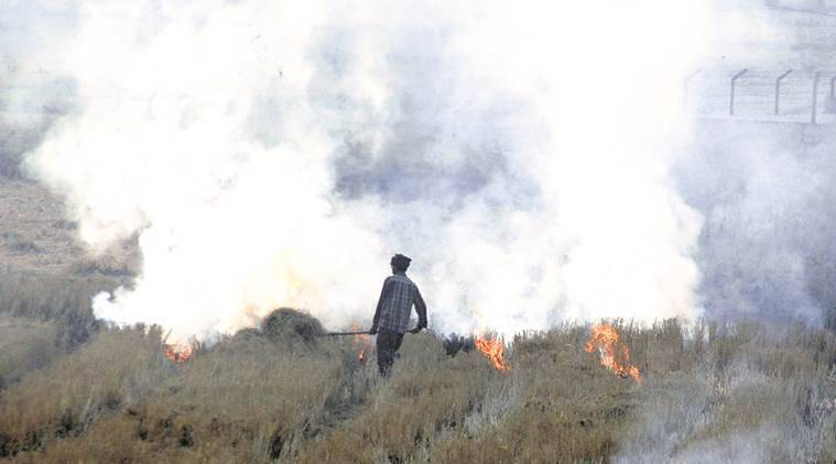 stubble burning, crop burning, pollution, indian express