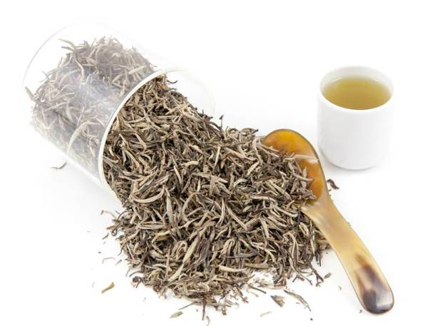 white tea, white tea benefits, white tea contents, white tea vs green tea, obesity hair fall, hair growth, memory loss, pregnancy, healthy teeth, digestion, indigestion, diabetes, blood sugar level, acne, wrinkles, dark spots, indian express, indian express news