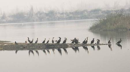 Binoculars out as migratory birds flock to thecapital