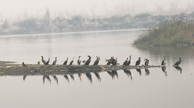 Gujarat may soon declare its first biodiversity heritage sites