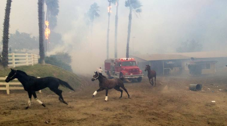 25 race horses killed by Southern California wildfire