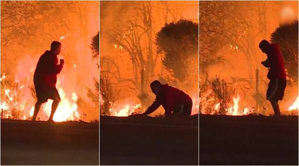 california, wildfire, thomas fire, LA fire, california wildfire rabbit, man saves rabbit from wildfire, los angeles wildfire, viral video, indian express, world news