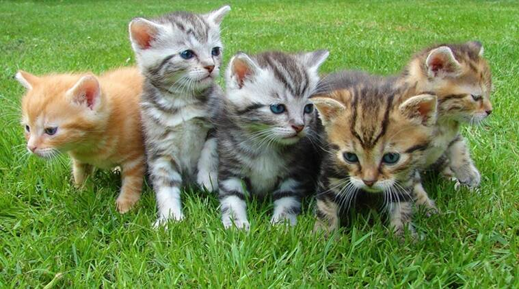 cats, cat videos, adoption of cats, show to adopt cats, PETA, cats up for adoption,