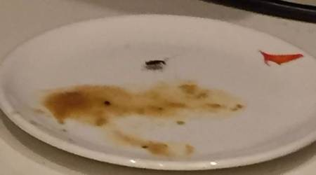 cockroach in Chinese eatery