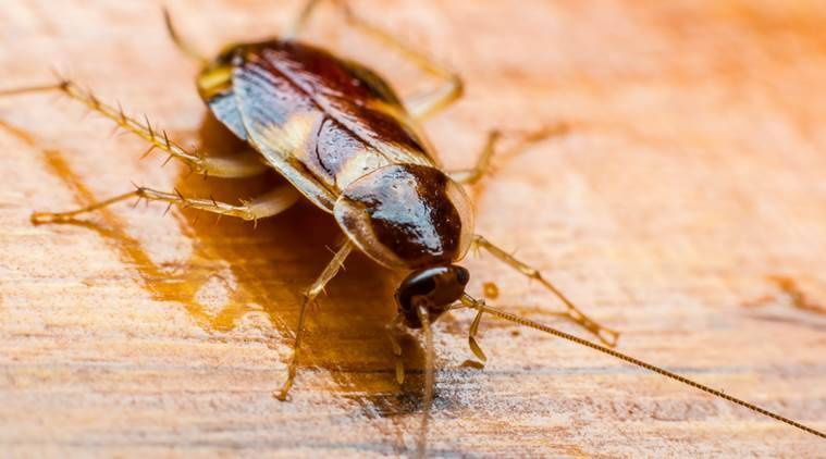 couple carry cockroach on flight, cockroach on flight, weird things people smuggle, chinese couple cockroach flight