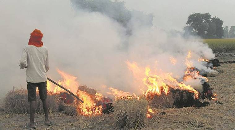 Crop burning in Punjab, Haryana