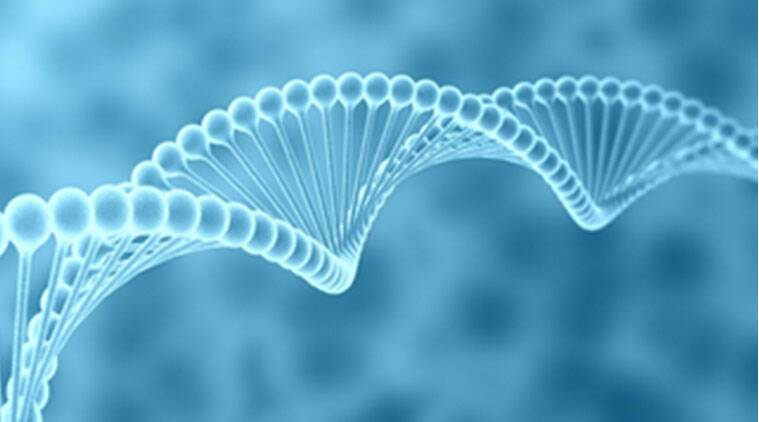 What a dna blueprint can achieve in crimebusting where india lags dna fingerprinting was first developed in 1984 by alec jeffreys in the uk after jeffreys discovered that no two people could have the same dna sequence malvernweather Choice Image