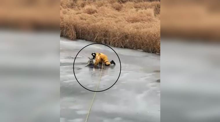 dog videos, dog being saved, dog saved from creek, dog stuck in ice video, animal videos, indian express, indian express news