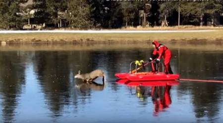 VIDEO: Santa Claus comes early? Red-suited firefighter rescues deer from frozen pond on a sleigh
